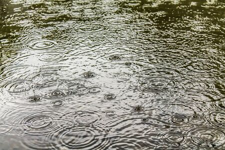 Circles and bubbles from the rain in a mud puddle