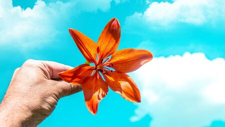 Orange flower lily in hand against the sky