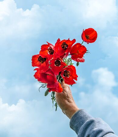 Red steppe poppies in the hands against the sky Standard-Bild