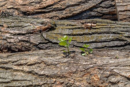 Stacks of wooden logs as background 版權商用圖片 - 128774033