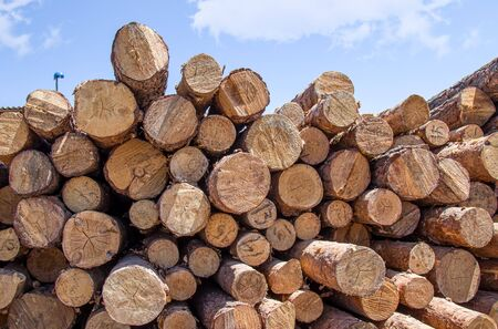 Stacks of wooden logs as background 版權商用圖片 - 128774089
