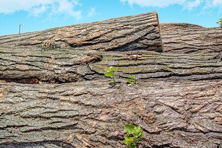 Stacks of wooden logs as background 版權商用圖片 - 128774336