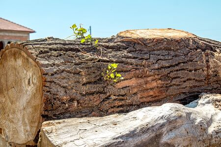 Stacks of wooden logs as background 版權商用圖片 - 128774479