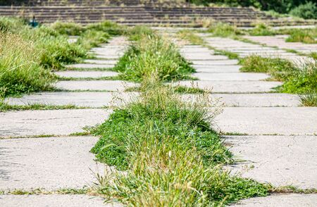 Grass grows through concrete tiles