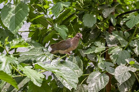 Fledgling dove bird on tree in nature