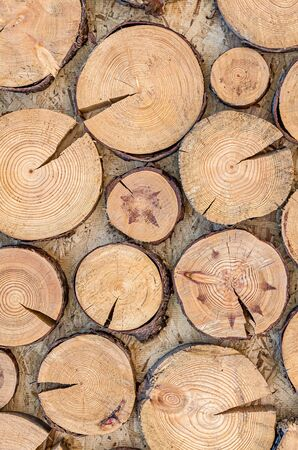 The wooden structure of the saw cut of the tree as a background