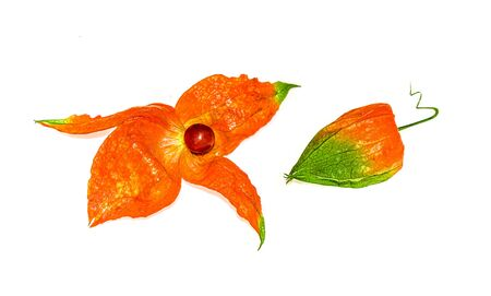 Red and green decorative physalis isolated on white background close-up Banco de Imagens