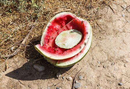 Watermelon peel trash outdoors close-up Stock Photo