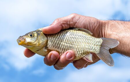 Crucian fish in the hand of a fisherman against the sky
