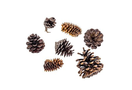 Dry spruce and pine cones on a white background