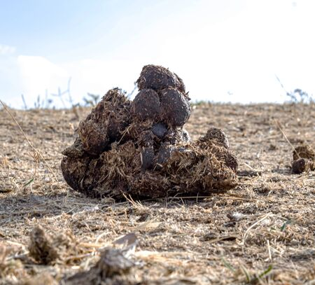 Horse excrement in nature close-up. Natural fertilizer. Environmental pollution. Stock Photo