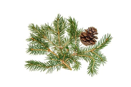 Coniferous tree branch and cones on a white background close-up