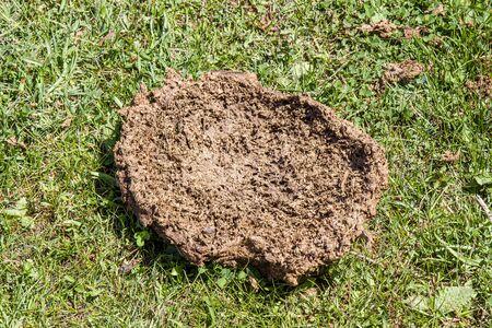 dry cattle litter on green grass