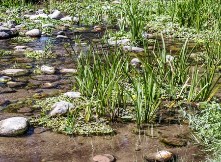 Wetland landscape in summer. Grassy boggy stream overgrown with grass. Stock Photo