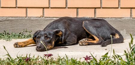 Homeless dog lies on the street in the city