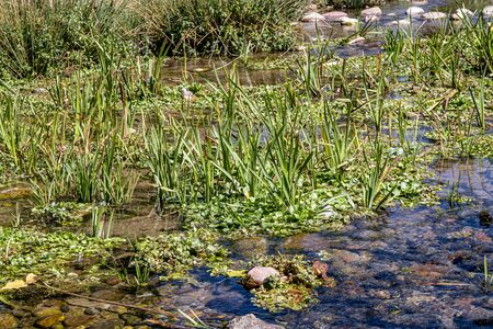 Wetland landscape in summer. Grassy boggy stream overgrown with grass.
