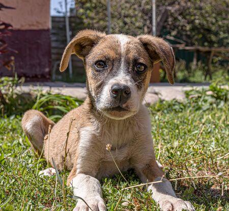 Homeless dog cute puppy on green grass