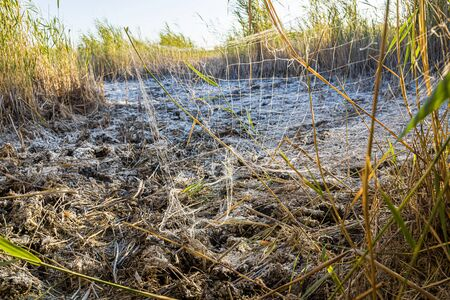 Old fishing net on the reeds. Poaching. Ecological disaster.