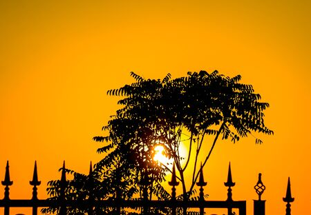 Silhouette of trees and metal fence at sunset background 写真素材