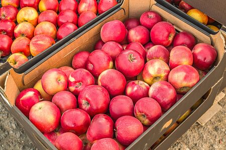 Harvest apples on the market in a box