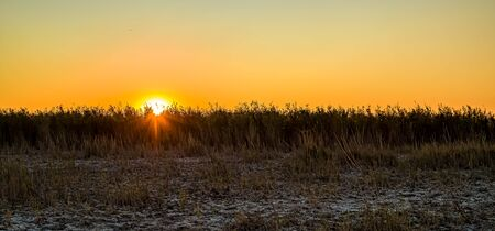 Dry cane reeds silhouette in the wind at sunset background 写真素材