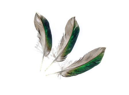Gray feather bird duck on a white background 免版税图像
