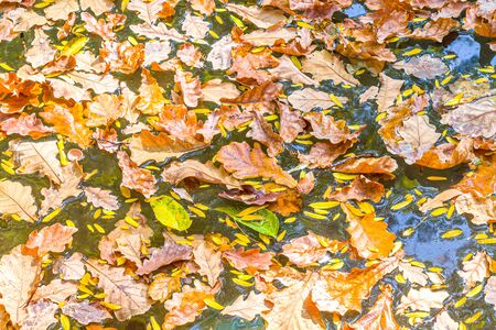 Autumn leaves in fountain water as background Stock Photo