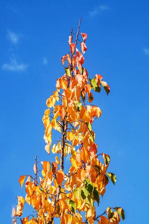 Yellow-red tree leaves against the sky