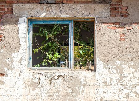 Old overgrown window in a brick wall