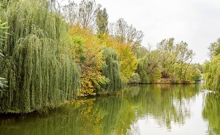 Autumn trees by the lake above the water. Selective focus. Stock Photo