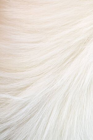 Dog hair as an abstract background