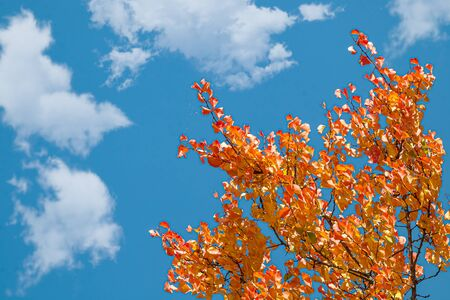 Autumn multi-colored crowns of trees against the sky