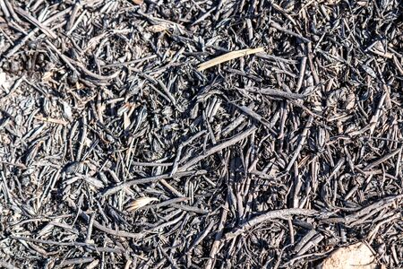 Burnt dry grass as background