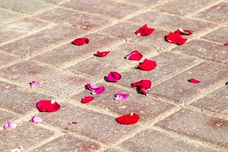 Rose petals on paving slabs