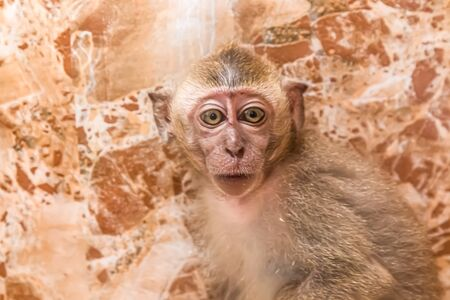 Little monkey in the zoo behind the glass