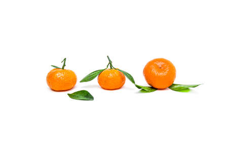 Bright ripe tangerines with green leaves on a white background. 写真素材