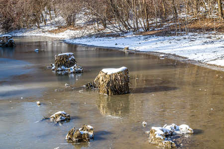 Stumps of trees frozen in the lake of a city park