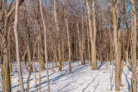 Trees in a city park. First snow. Landscape. Standard-Bild