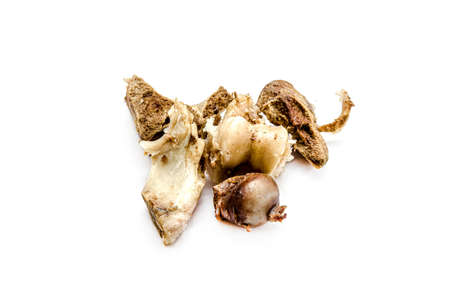 Gnawed bones of a cow on a white background.