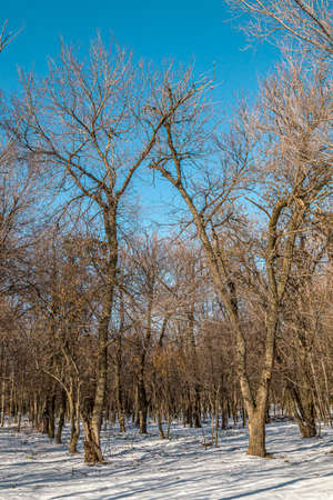 Trees in a city park. First snow. Landscape. 写真素材