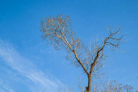 Dry tree branches against the blue sky