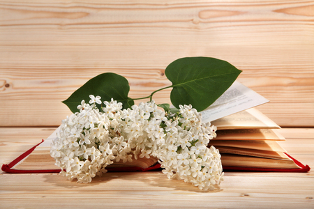 lilacs: Bunch of white lilacs and open book on wooden background
