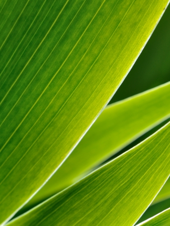 Green leafs in abstract style