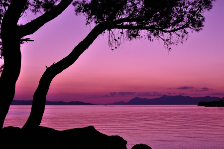 Purple sunset with tree silhouette at sea Stock Photo