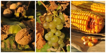 Collage with autumn fruits and vegetables - walnut, wine grape and corn