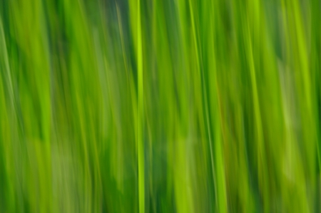 An abstract green background patterns based on nature and grass