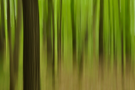 panning shot: Abstract forest - focused on one tree, shot with panning technique