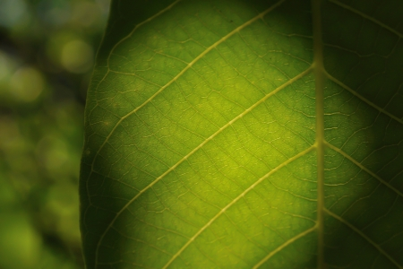 mystique: Detail view of mystic leaf with blurred background Stock Photo