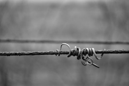 Black and white photo of vine crook on wire photo