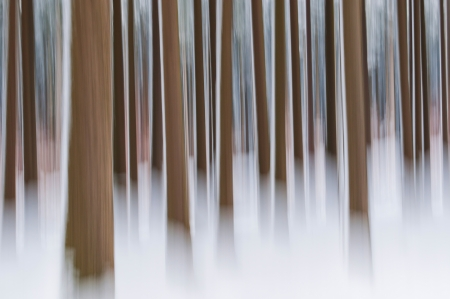 panning shot: Abstract forest in winter - focused on one tree, shot with panning technique Stock Photo